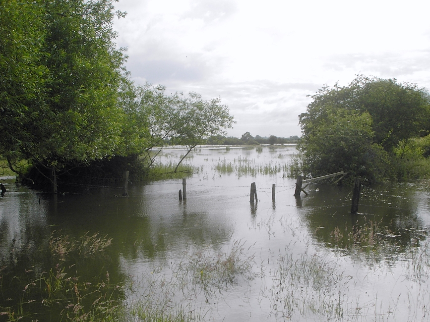 Edge of Flood Plain, 27 June 2007 by John Pegg